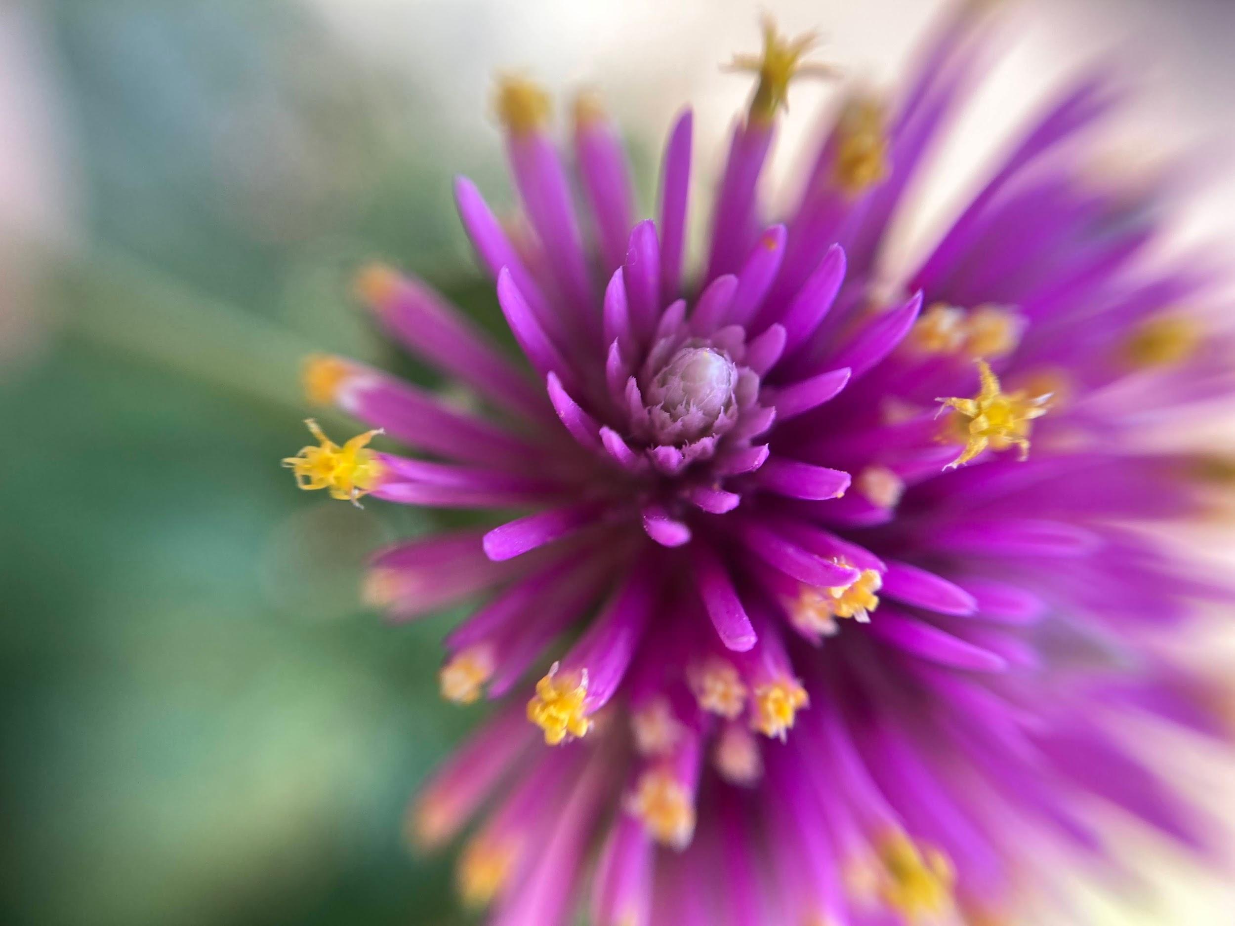 スタッフが接写レンズで撮影した花